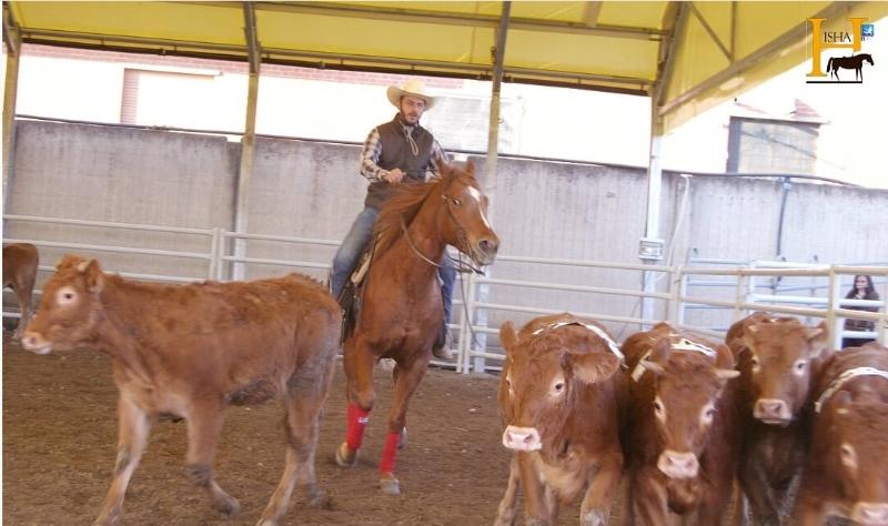 ranch-sorting