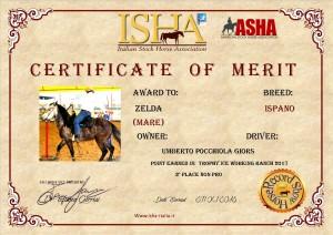 zelda-certificato-wr